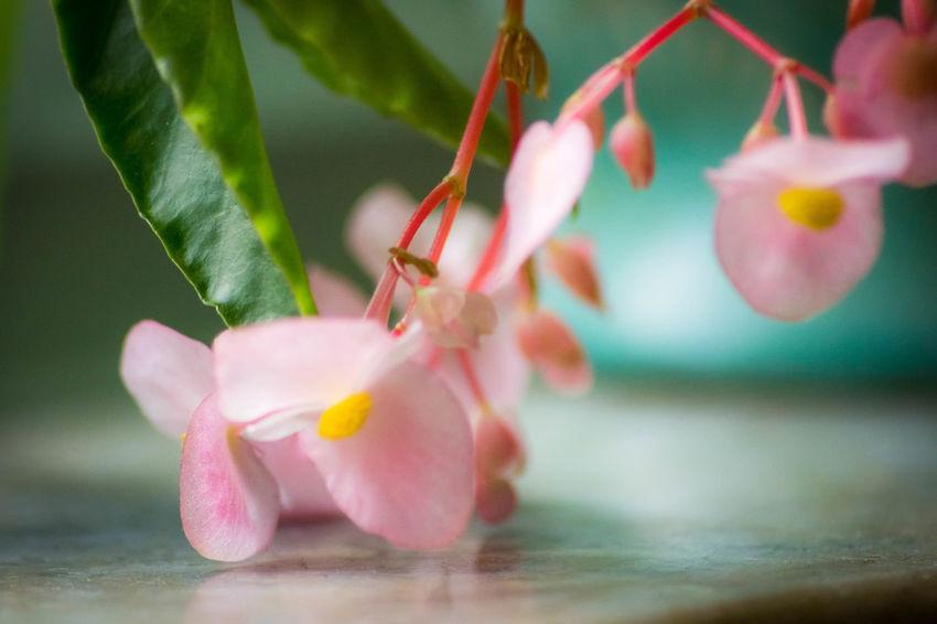 Beauty In Nature Blooming EyeEm Macro EyeEm Masterclass EyeEm Nature Lover Flower Flower Head Growth Macro Macro Photography Petal Plant