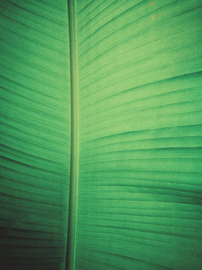 Green Color Leaf Close-up Nature VSCO Vscocam HuaweiP9 Taking Photos Hanging Out Plant Nature Still Life Beauty In Nature Maximum Closeness Mobilephotography Eye4photography