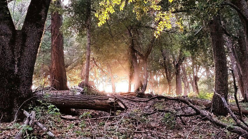 The light breaks Palomar Palomar Mountain Light Sunset Sunlight Through The Trees