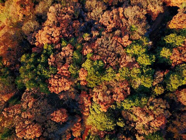 Nature No People Close-up Outdoors Day Beauty In Nature Dronephotography Autumn Leaves Autumn Colors Autumn 空撮 Beauty In Nature Nature DJI Mavic Pro Dji ドローン
