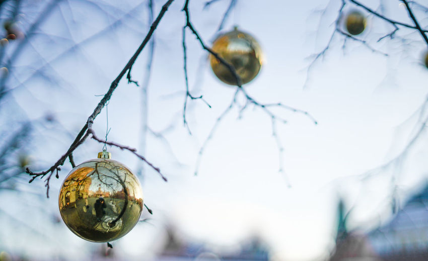 Close-Up Of Christmas Baubles Hanging On Bare Tree