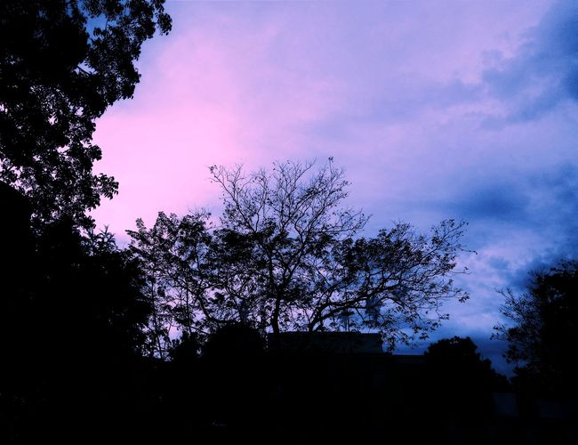 The dawn is breaking. Find your soul and keep it at peace. EyeEmNewHere Eyeem Philippines EyeEm Dawnsky Dawn Light Dawn Breaks Life Peace And Solitude Silhouette Tree No People Sky Nature Outdoors Freshness Beauty In Nature