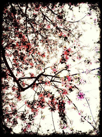Spring Sky's.