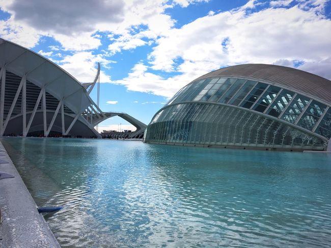 Oceanographic Blue Sky València Aquarium SPAIN Study Abroad