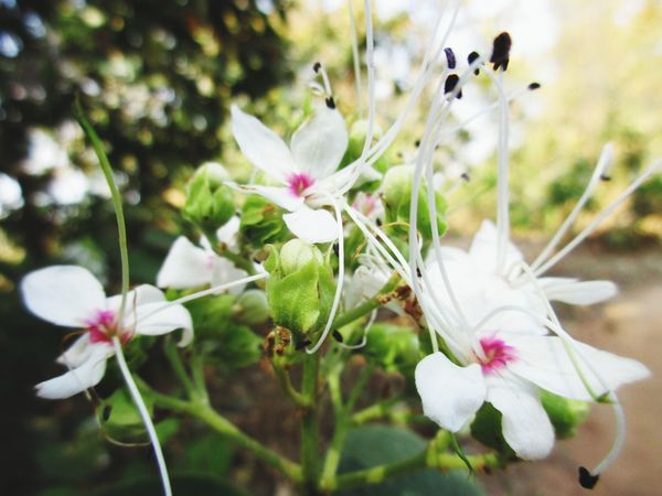 Flower Head Flower Springtime Pink Color Petal Blossom Summer Close-up Plant