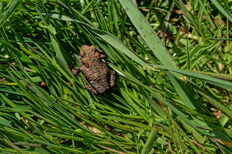 High angle view of frog on grass