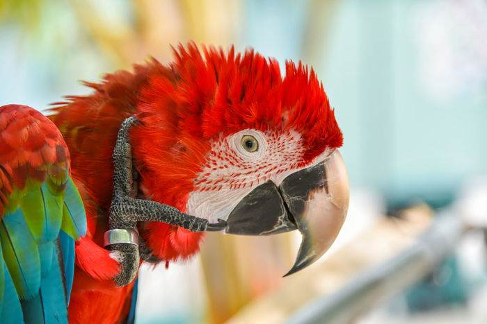 Amazon Animal Beuty Bird Bird Photography Feather  HEAD Macaw Macaw Bird Macaw Bird. Macaw Parrot Macaw Red Paradise Parrot Red Shot Sleep