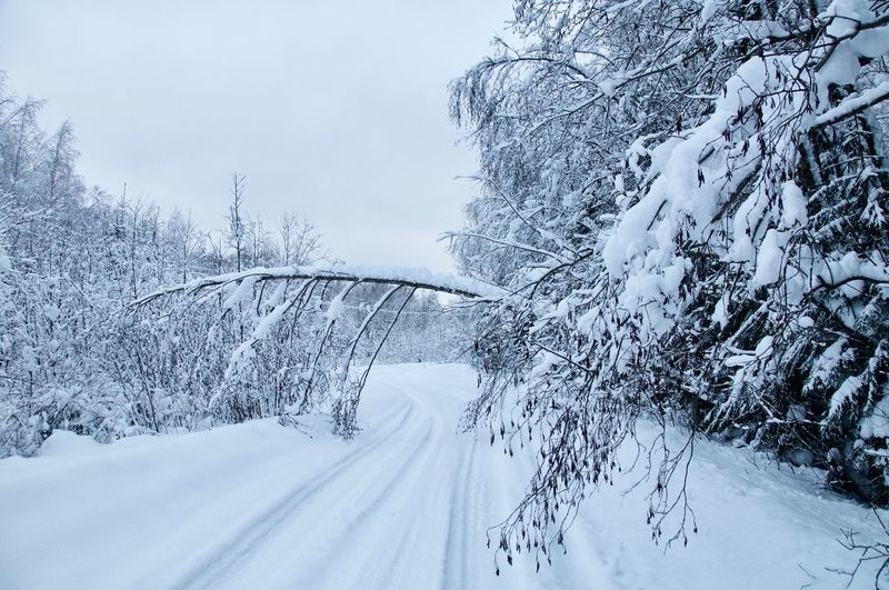 russia winter Road Fallen Tree Forest Tree Snowing Snow Mountain Cold Temperature Winter Frozen White Color Weather Sky Deep Snow Blizzard Cold Pine Tree Pine Woodland Snow Covered Tire Track