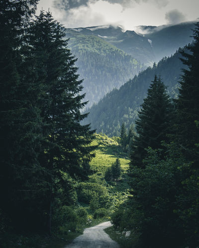 Scenic View Of Trees Growing On Mountains