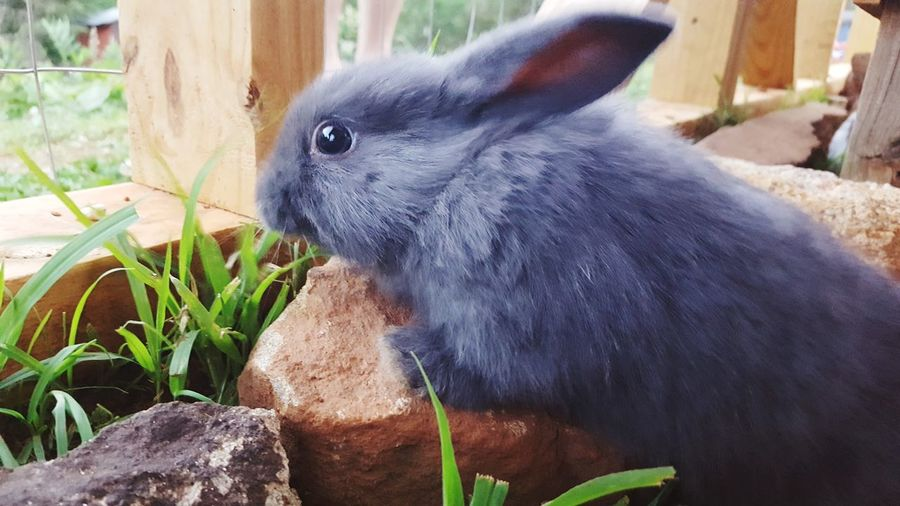 Domestic Animals Pets Animal Rabbit Portrait Pet Rabbit Pet Photography  Bunny  Petsofeyeem