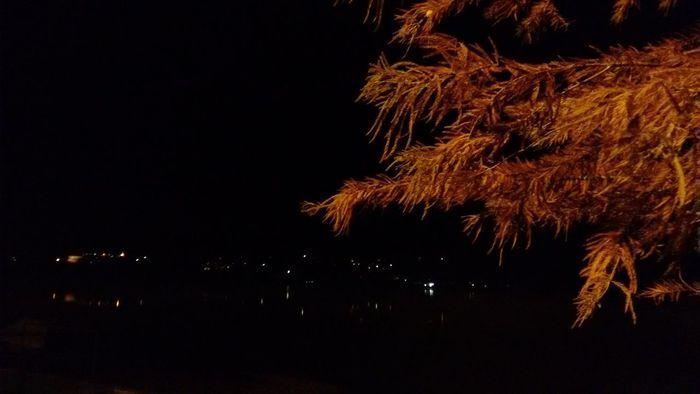 Night Tree Sky Lake Nature Night Impressions Landscape