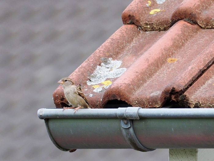 Close-up of water drops on rusty pipe