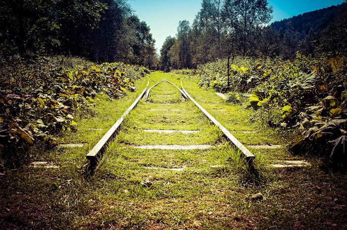 Tree Nature The Way Forward Tranquility Landscape No People Day Tranquil Scene Railroad Track Field Outdoors Transportation Growth Beauty In Nature Scenics Grass Sky Discontinued Railroad Beggining Of The End Rail Transportation Discontinued Railroad Kamishihoro Hokkaido Japan Memories