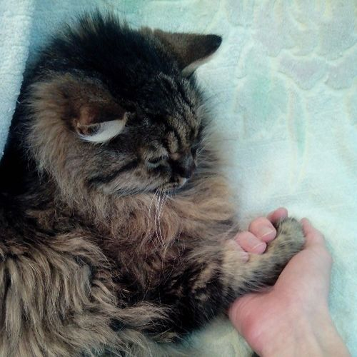#2014 #дружба #friendship Friends Friend Caturday Friendship Catsofinstagram Catsagram 2014 дружба We_love_cats