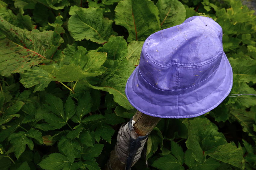 Lost violet plastic hat put on a stake for recovery. Abandoned Close-up Eye4photography  TakeoverContrast Pivotal Ideas EyeEm Nature Lover Green Hat Kept Leaves Lilac Lonely Lost Natural Pattern Nature No People Outdoors Plastic Post Preserved Purple Saved Stake Violet Wood End Plastic Pollution