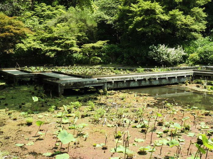 風景 みどり 池 植物 自然