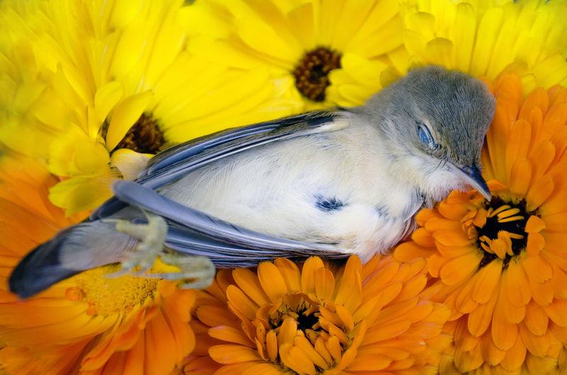 Close-up of bird on sunflower