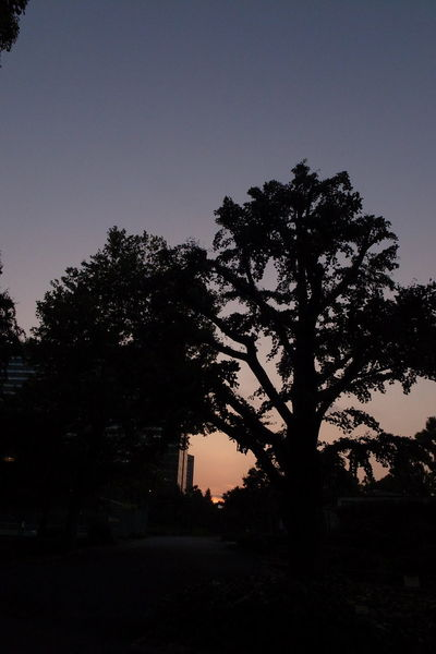 Sunset Sunset_collection In The Park Relaxing Walking Around Taking Photos Taking Pictures Streetphotography Cityscapes Shiluette Light And Shadow Concrete Jungle