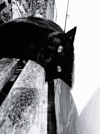 Relaxing Alfie Blackandwhite Cat Playing Cat Close Up Cats Of EyeEm Cats Lovers  Cat Relaxing Moments Cats 🐱 Catlover Cat♡ Cat Watching Black Cat Black Cat Photography
