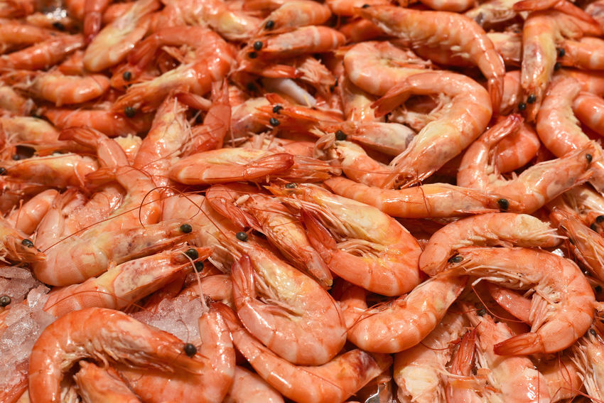 Fresh shrimps or prawns on a fish market stall. Gambas Scampi Shrimps Backgrounds Close-up Crustacean Fish Market Food Food And Drink Fresh Prawns Fresh Shrimps Freshness Full Frame King Prawns Large Group Of Objects Market Stall Meat No People Prawn Prawns Retail  Seafood Shrimp - Seafood Still Life Wellbeing