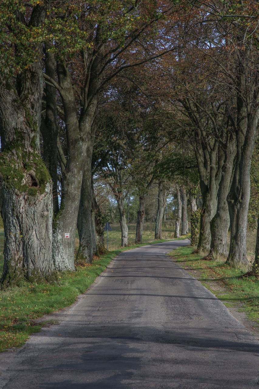 tree, plant, the way forward, direction, road, transportation, tree trunk, trunk, diminishing perspective, no people, nature, land, day, treelined, growth, vanishing point, tranquility, outdoors, tranquil scene, empty road