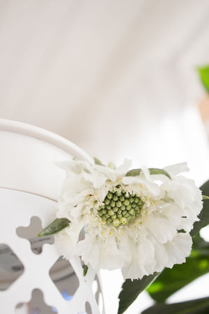Scabiosa Caucasica Beauty In Nature Bouquet Close-up Day Flower Flower Head Flowering Plant Focus On Foreground Fragility Freshness Growth Indoors  Inflorescence No People On The Porch Petal Plant Pollen Summer Vulnerability  White And Green White Color