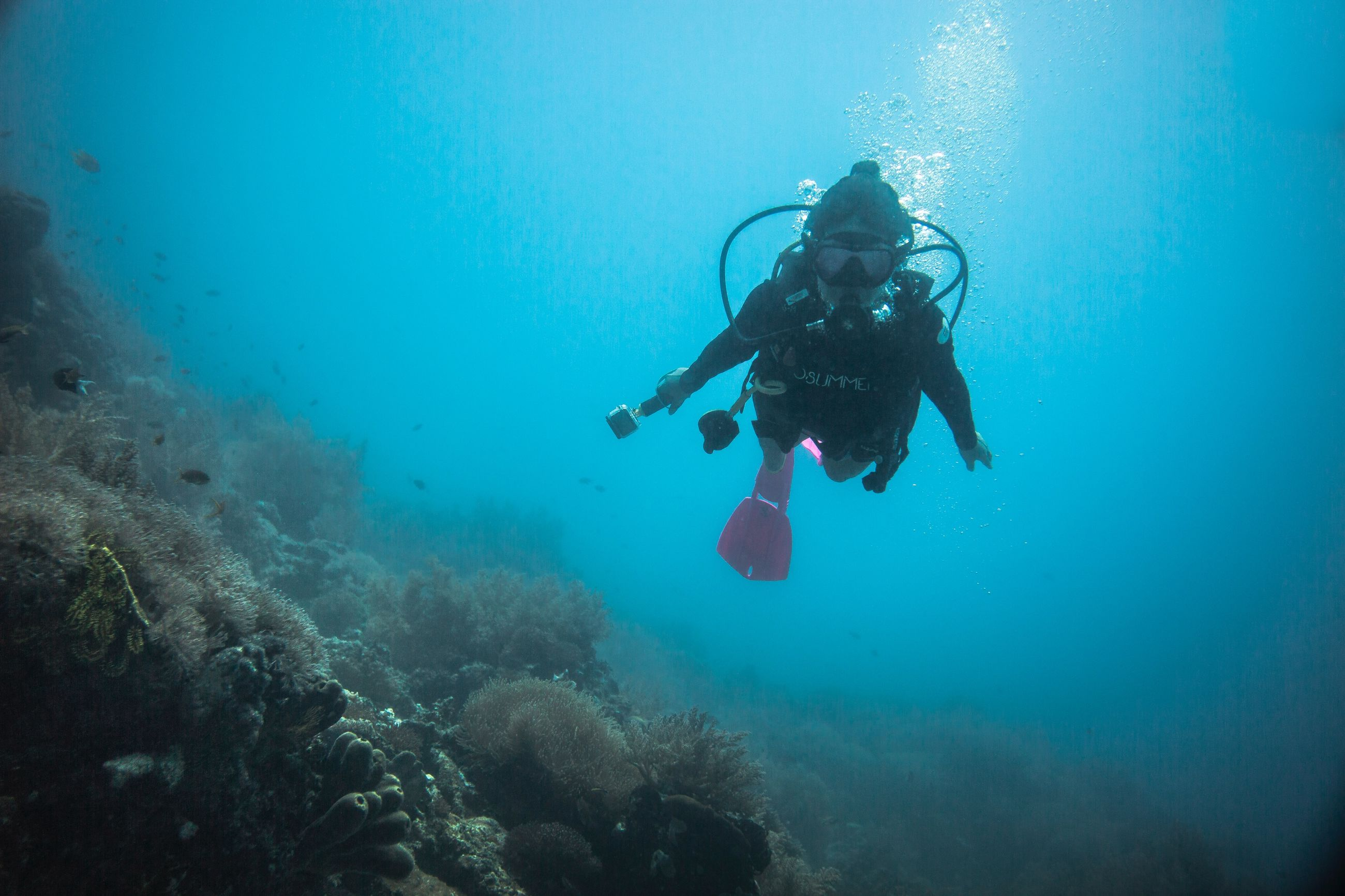 underwater, undersea, sea, water, swimming, aquatic sport, adventure, scuba diving, exploration, nature, sport, one person, diving equipment, unrecognizable person, sea life, real people, animal, blue, coral, outdoors, marine, underwater diving