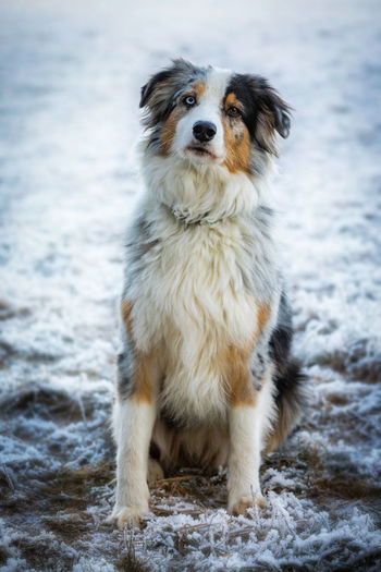 Animal Themes Close-up Cold Temperature Day Dog Domestic Animals Focus On Foreground Mammal Nature No People One Animal Outdoors Pets Portrait Snow Winter