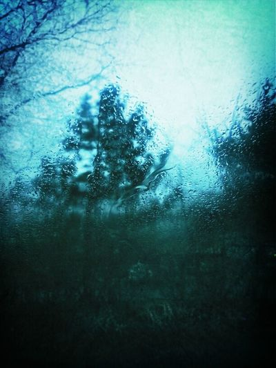 rainy day in december. I think nature is confused. Rain Trees