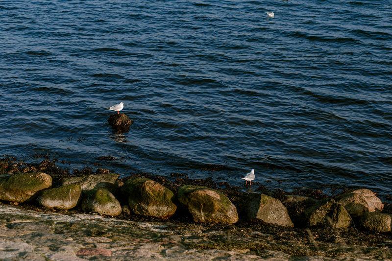 Seagulls perching on rock in sea