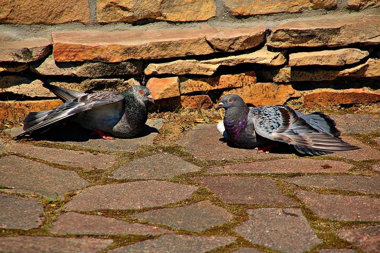 High angle view of pigeons on stone wall