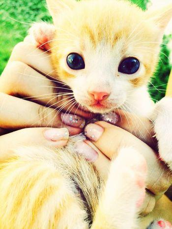 ?? Cat Little Blue Eyes Cute