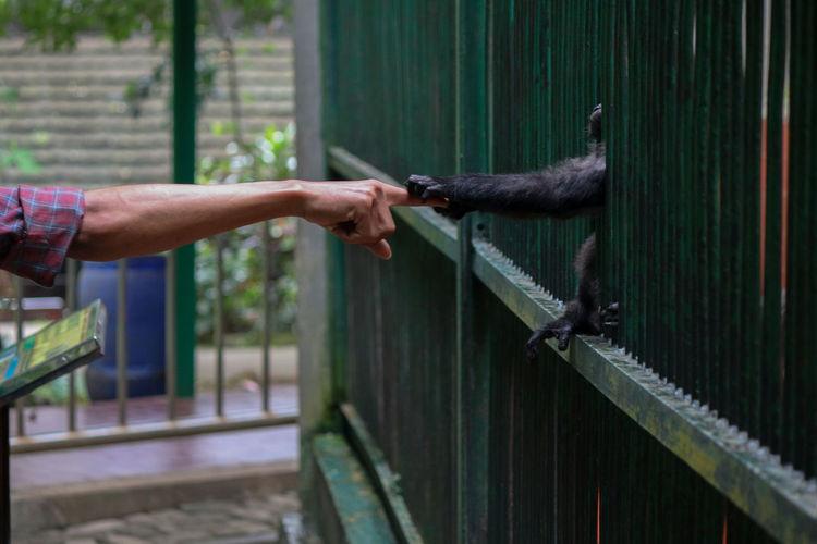 Close-up of man holding animal hand
