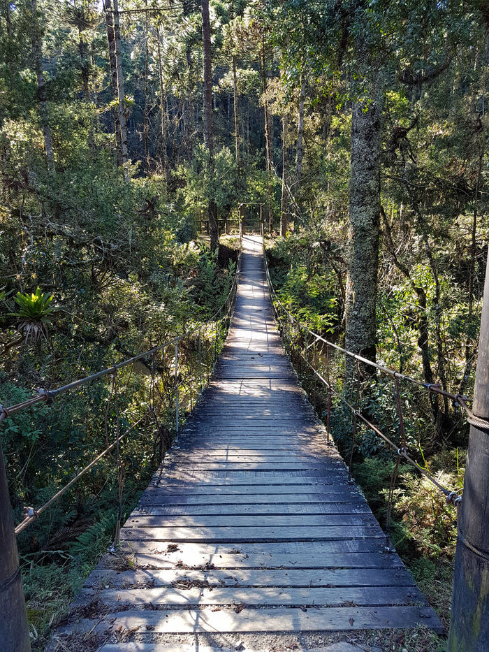 Horto Florestal, Campos do Jordao-Sp Wood Bridge Forest Hikking Trekking Brazil Hortoflorestal Campos Do Jordão Minamalism Nature Minimal Tree Shadow Sunlight Field Grass Long Shadow - Shadow Walkway Long Pathway Garden Path Woods Focus On Shadow EyeEmNewHere
