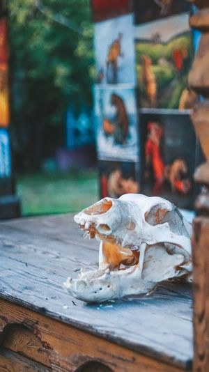 Skull Focus On