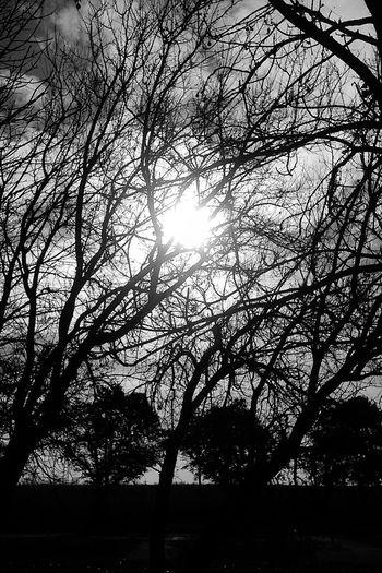 Blackandwhitephoto Black And White Photography Blackandwhite Black And White Black & White Blackandwhite Photography Blackandwhitephotography Black&white