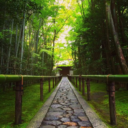 Tree Nature Outdoors Beauty In Nature The Way Forward Tranquil Scene Bamboo Grove Growth Tranquility Bamboo - Plant Forest No People Green Color Day Scenics Footbridge 京都 大徳寺 Kyoto Daitoku-ji