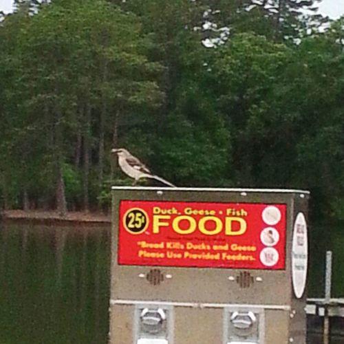 Lake Lake Oliver Raindrops Bird Bird At The Lake Pretty Birdy