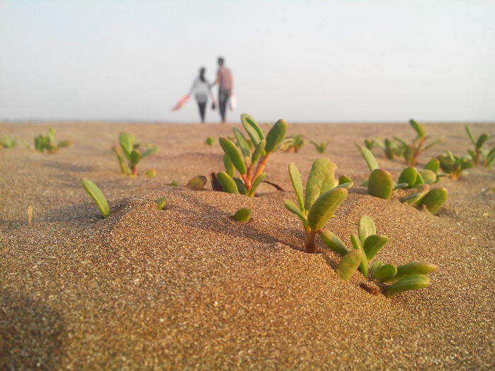 Plants at beach with couple in background