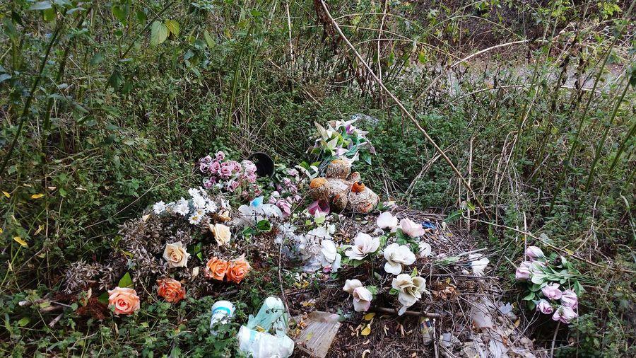 Fruška Gora Jazak Garbage Dead Nature Bear Toy Fake Flowers Cemetery Cemetery Flowers Colorful