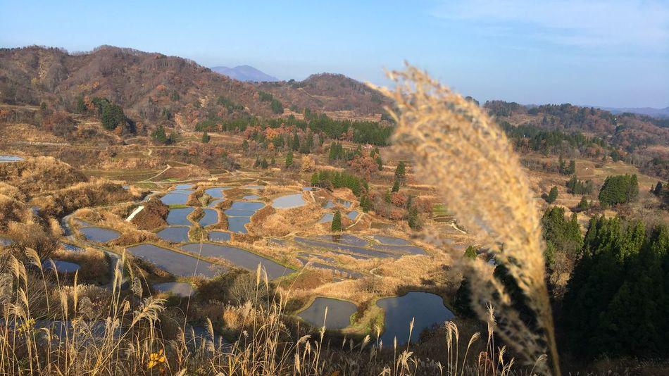 夕方になると、5分くらいでコロコロ雰囲気が変わってくる。この数時間後には雪が降るのだけれど、確かに寒かった。 すすき Silver Grass Pampas Grass Nostalgia Nature Growth Tranquility Landscape Scenics Tranquil Scene Beauty In Nature Agriculture EyeEm Best Shots EyeEmBestPics From My Point Of View Rice Terraces Rice Field Water Reflection Non-urban Scene Hoshitouge Touka-machi Niigata Rural Scene Tanada