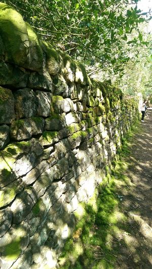 A mossy wall in Baildon.