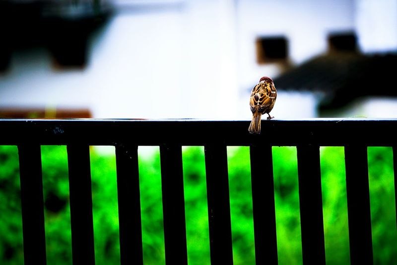 A bird is perch, enjoying the peaceful evening.. Animal Themes Animals In The Wild Nature Outdoors First Eyeem Photo