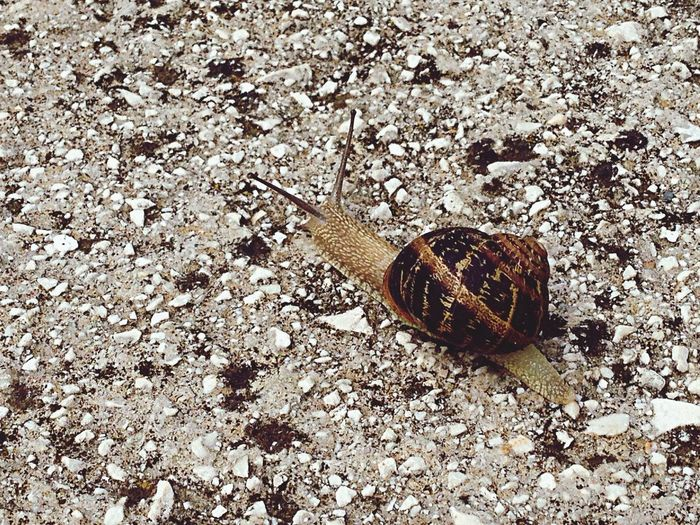 Respect every living creature, this beautiful snail showed up after a couple of rainy days, I decided to photograph her because I've never seen one so big before ✌️ Everyformoflifeisimportant Taking Photos Check This Out Biology