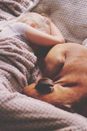 High angle view of girl with dog sleeping on bed