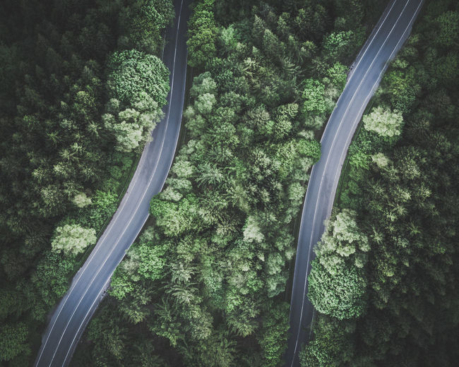 Aerial view of roads in forest