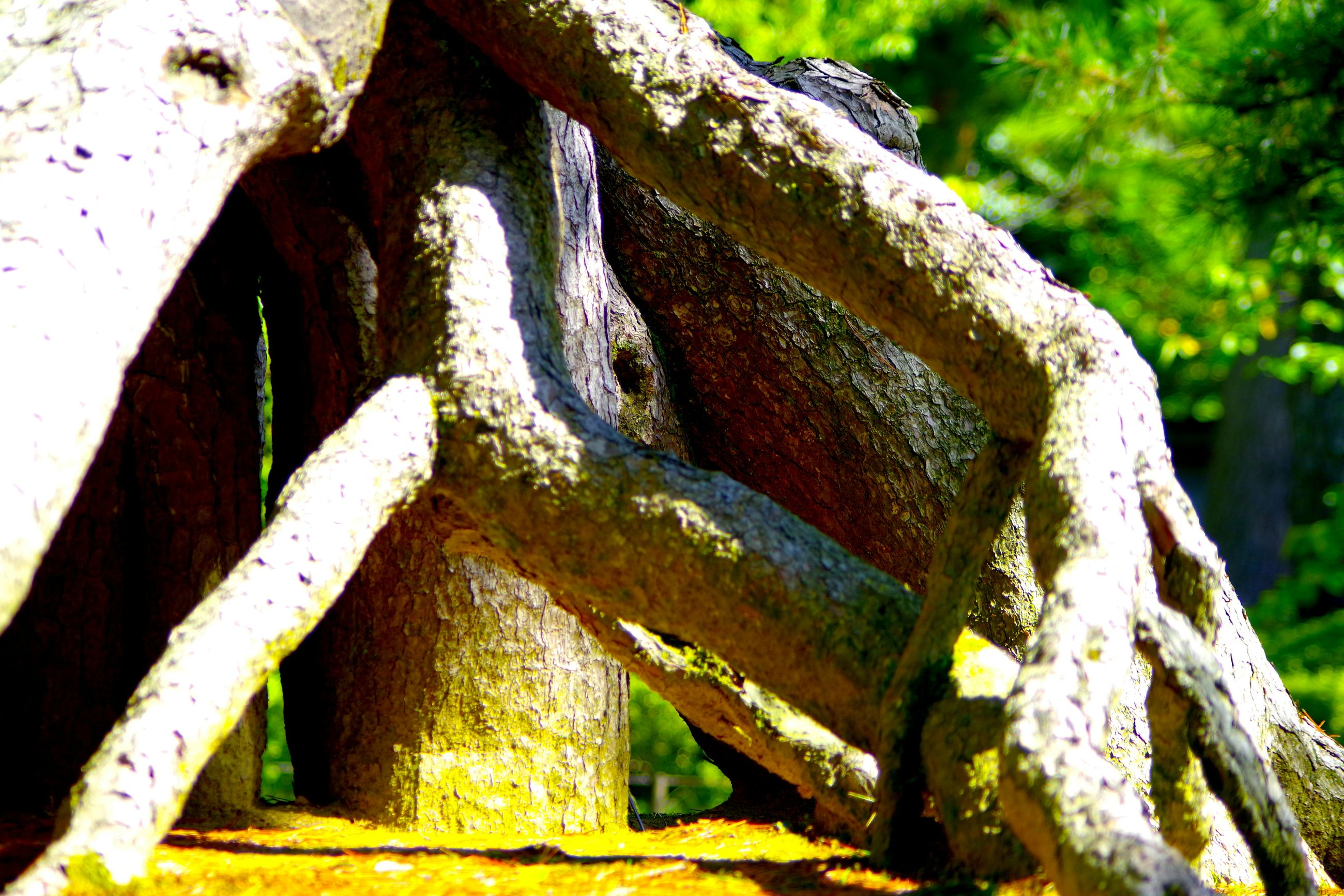 close-up, focus on foreground, tree, tree trunk, wood - material, old, weathered, growth, textured, day, outdoors, nature, no people, damaged, moss, branch, forest, bark, selective focus, sunlight