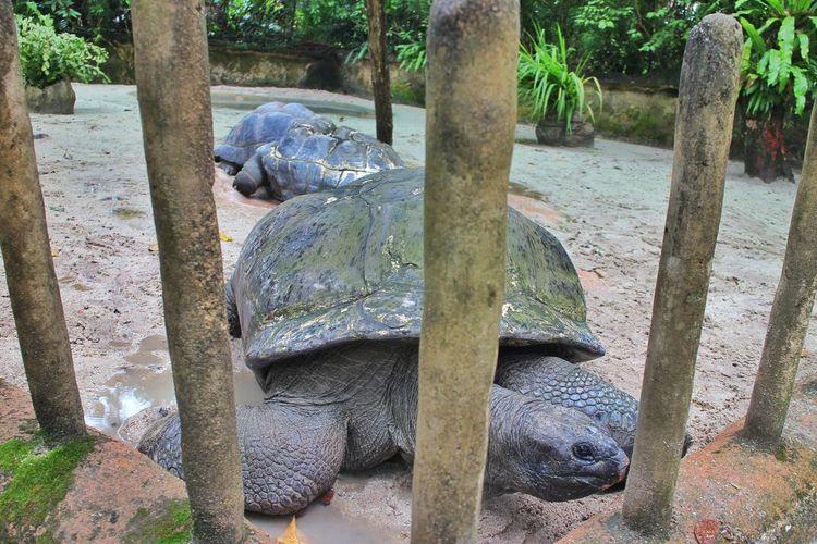 Big Animal Big Reptile Second Largest Second Largest Turtle Tree Reptile Iguana Tortoise Beach Water