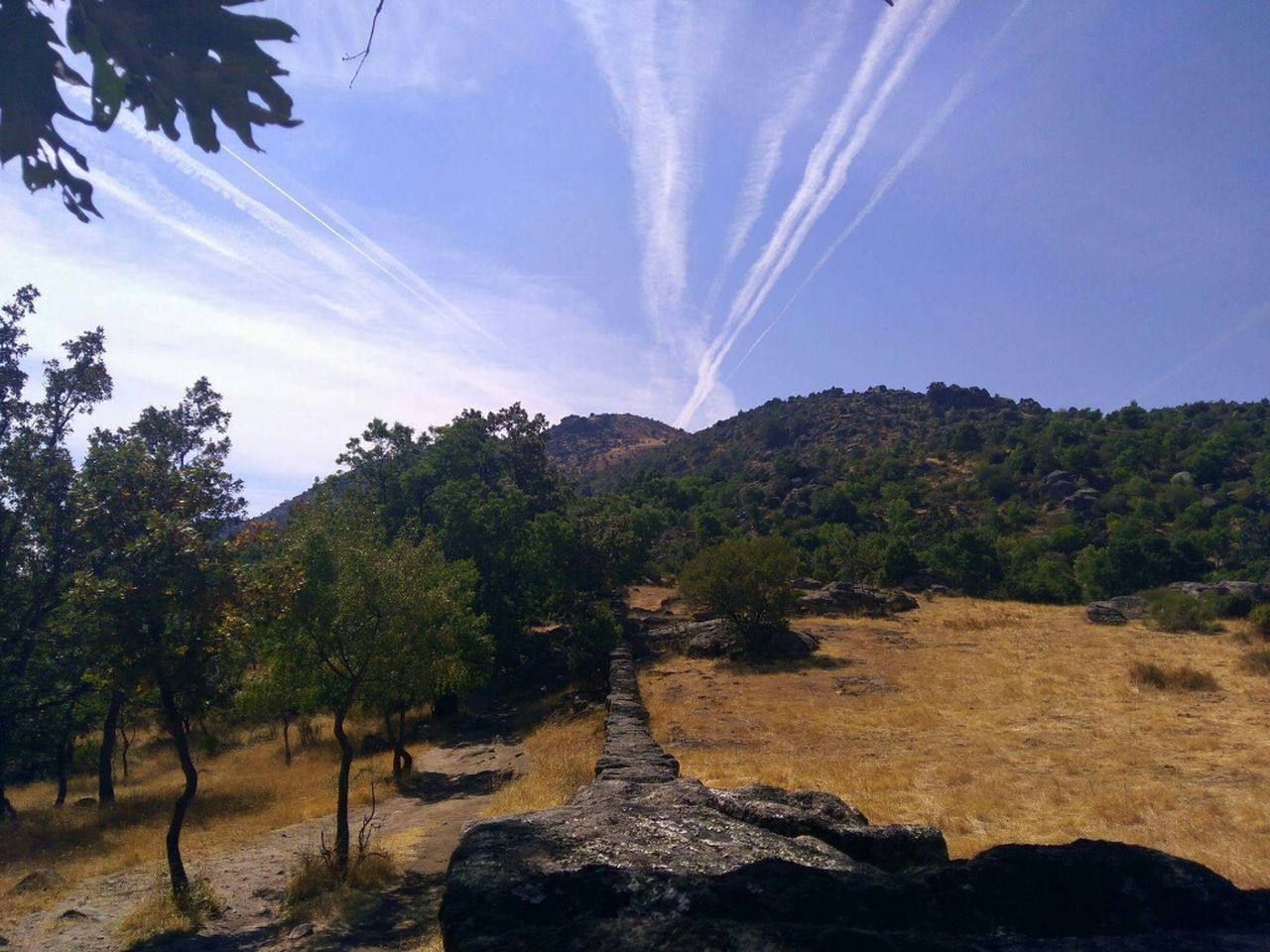 tree, nature, beauty in nature, sky, no people, scenics, growth, outdoors, day, vapor trail
