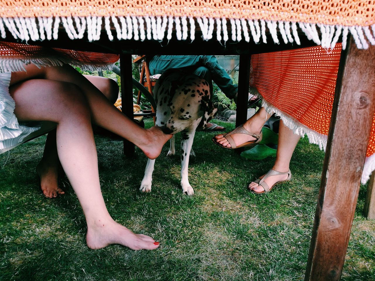 Low section of people with dog sitting at table